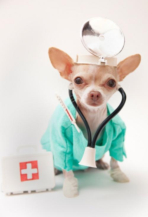 модель, картинки с днем рождения ветеринар можно подавать